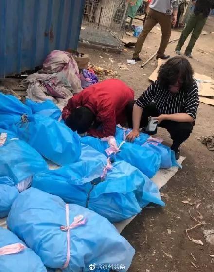 山东一救助站失火烧死16只猫狗 疑有人蓄意纵火