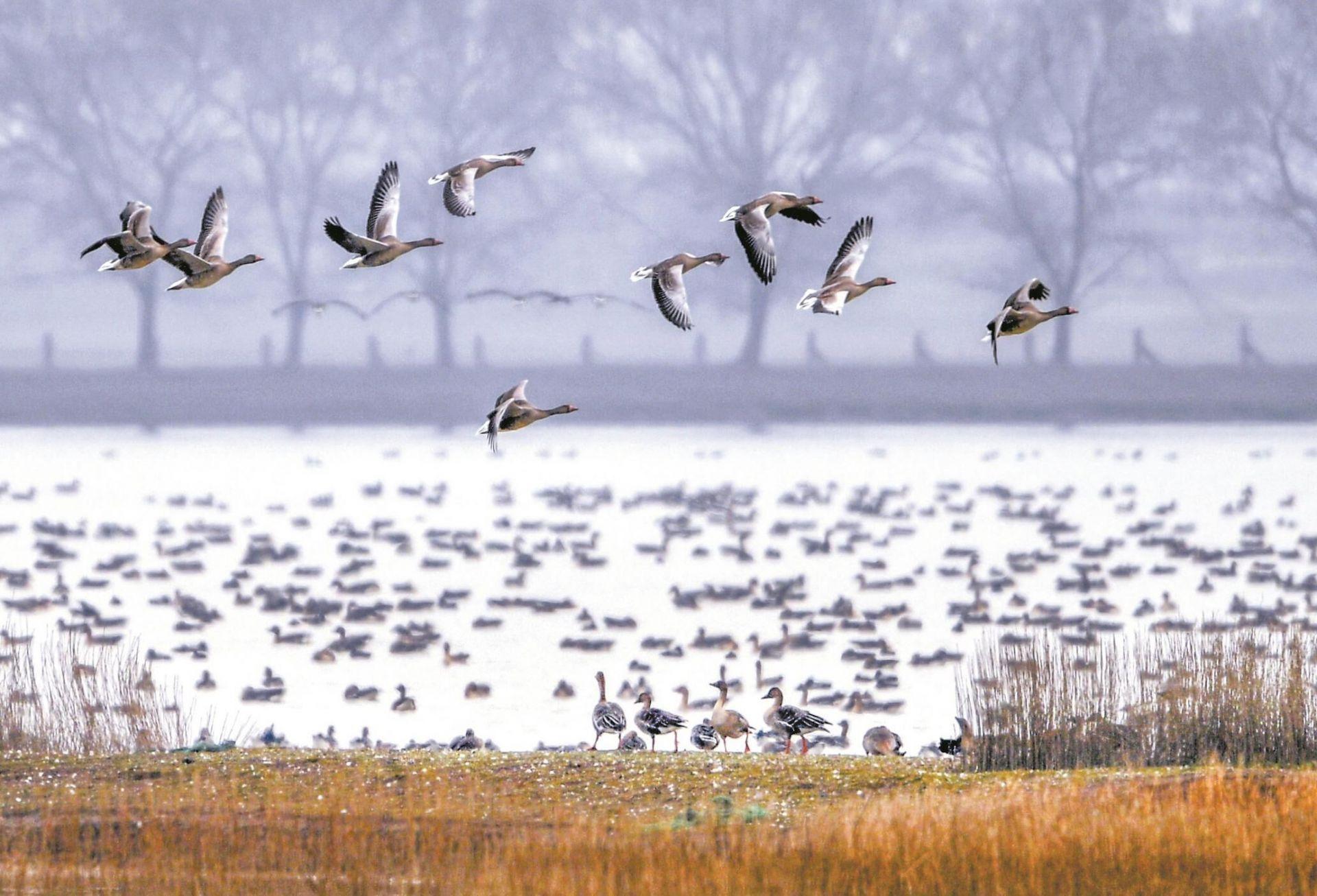 十余万候鸟 留汉过大年
