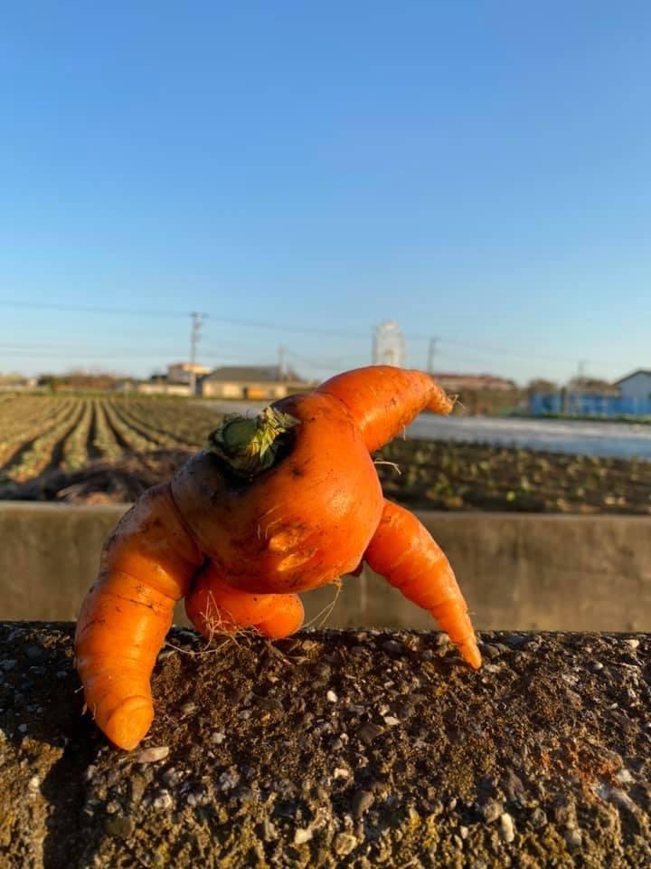 进击的胡萝卜?日本一农场主网上展示趣味蔬菜